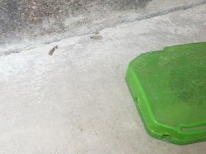 玄関ポーチで発生した羽アリ