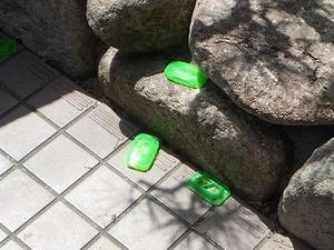 玄関に多く設置されたアリ用毒餌剤