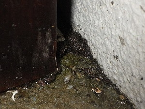 基礎面側ウッドデッキ周辺で確認された蟻道