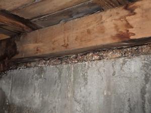 浴室土台のシロアリ被害