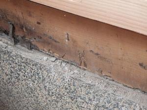増築箇所でのシロアリ被害