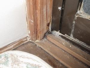 羽アリ発生が報告された浴室入口枠