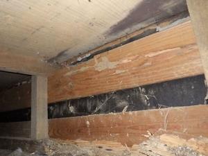 羽アリ発生が確認された玄関周辺の床下で確認された被害