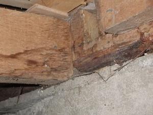 トイレ土台で確認された蟻道