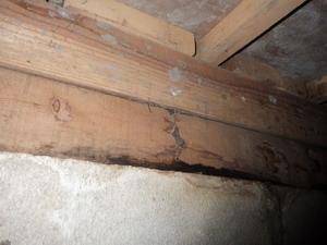 プレハブ集合住宅土台部のシロアリ被害