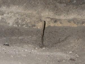 群飛孔の多い床下