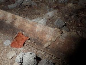 床下に放置された木片のシロアリ被害