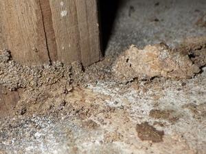 床束の蟻道とシロアリ