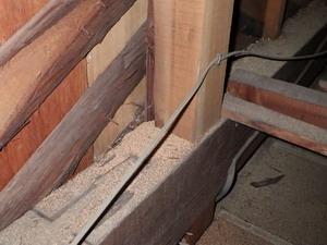 小屋裏で確認されたアメリカカンザイシロアリの糞の堆積