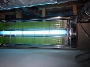 天井裏に設置したライトトラップ