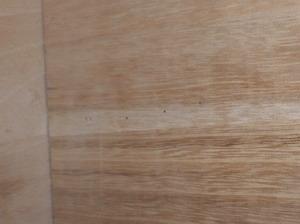 桐製箪笥で確認された虫孔