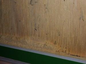 壁内にある合板のアフリカヒラタキクイムシ被害