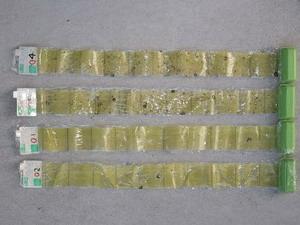 捕虫紙には色々な昆虫は捕獲されます