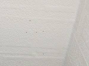 天井で確認された成虫脱出孔