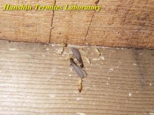 阪神ターマイトラボウェブサイト2004トップページ画像